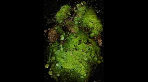 "8.5x11.7"" Flat of Moss from Eastern Shore of Lake Winnipeg"
