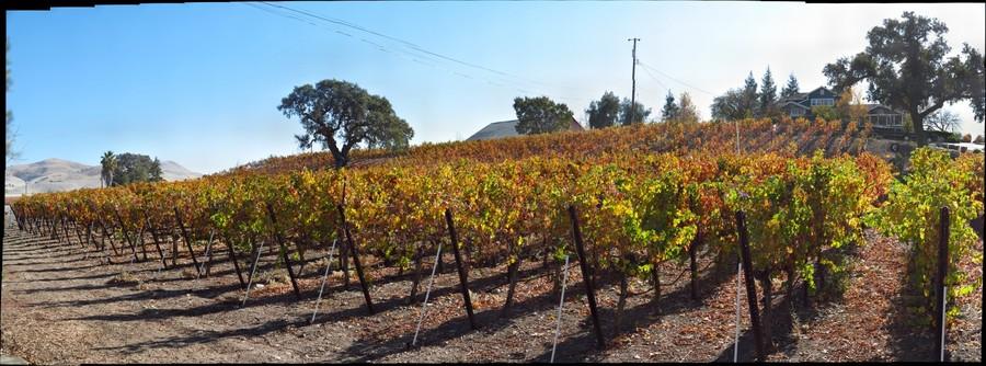 Boa Ventura Winery