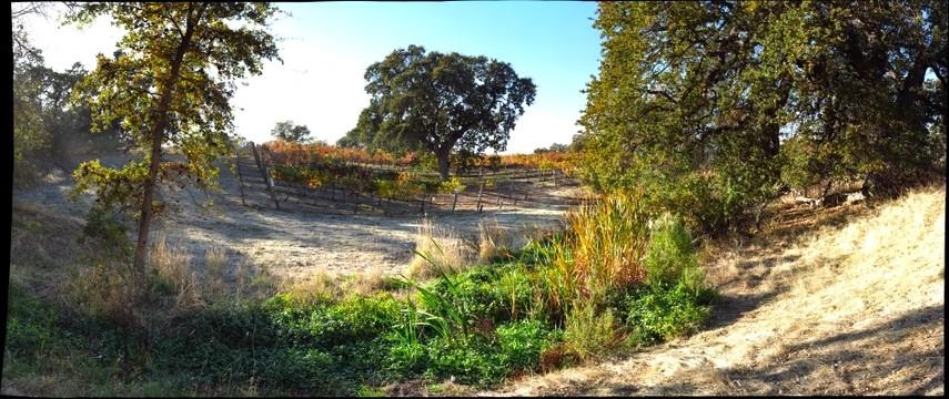 Fenestra Vineyard