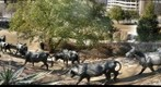 Cattle drive, from the top