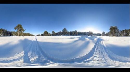 Siberian winter forest