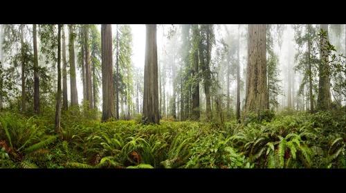 Ladybird Johnson Grove, Redwoods National Park
