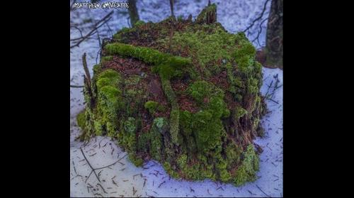 500 Mega Pixel - Green Moss Stump by Matthew Gorveatte