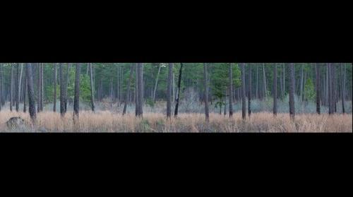 Greenwood Plantation Panoramic