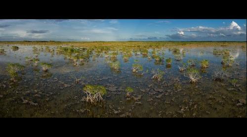 Everglades Mangroves Panoramic