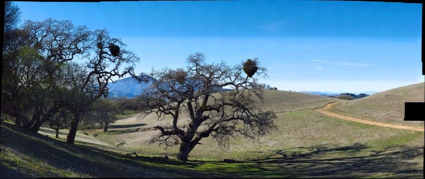 Big Valley Oak