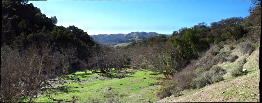Sycamores Along Alameda Creek