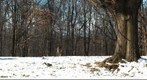 Deers in Snow - Garret Mountain Park, NJ 