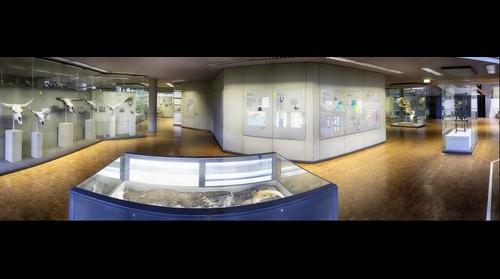 Naturkundemuseum Stuttgart