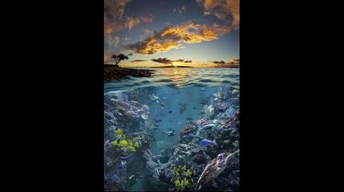 Underwater Hawaiian Landscape
