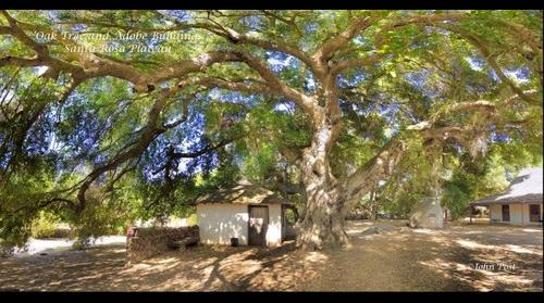 Oak-Tree-and-Adobe-Buildings-Santa-Rosa-Plateau