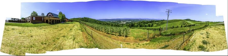 Apple Orchard in Charlottesville, Virginia