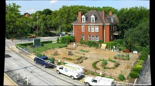 22 July 2014:  The Edible Teaching Garden at Mid-Season