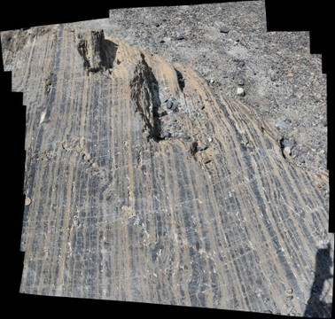 Kink banding in Eldon Formation carbonates, exposed on roche moutonee east of Athabasca Glacier