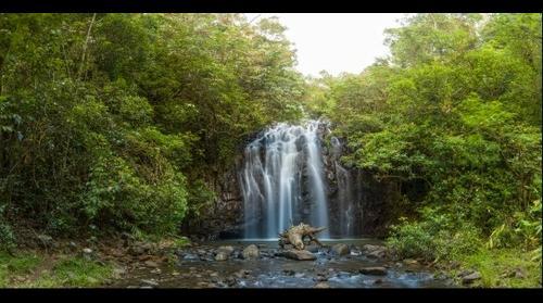 Millaa Milla Falls - QLD - Australia