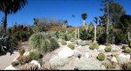 Huntington_desert_04
