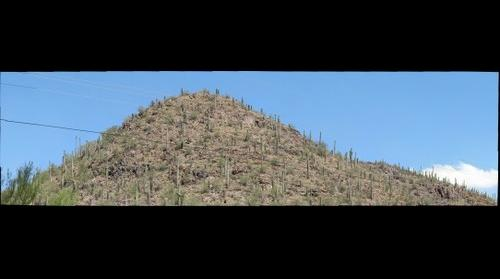 Buffelgrass Treatment Site