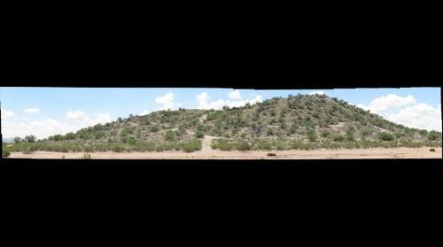 Buffelgrass Treatment Site 3