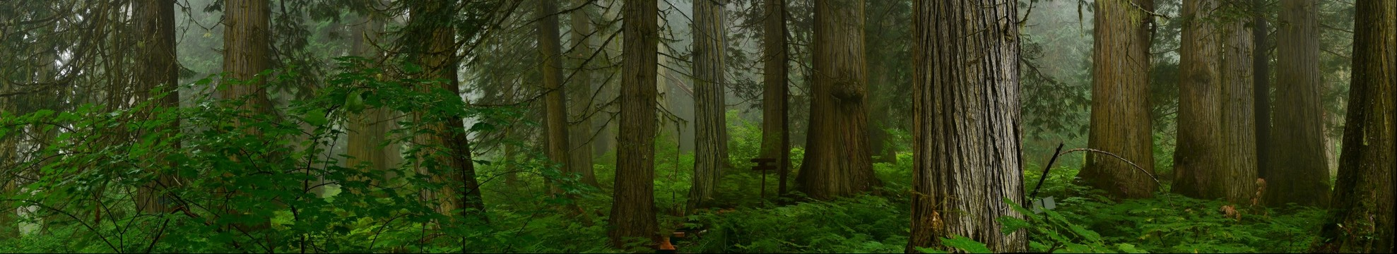 Ancient Forest 6