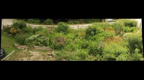 Butterfly Garden July 29