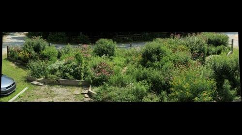 Butterfly Garden August 5