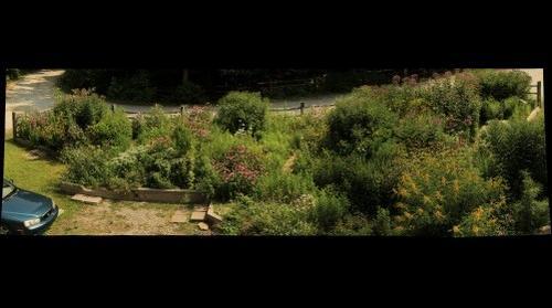 Butterfly Garden August 10
