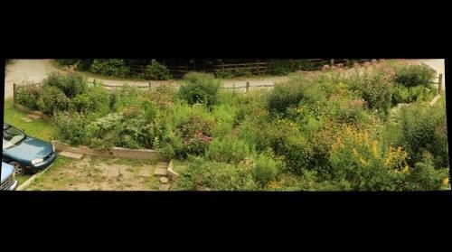 Butterfly Garden August 18