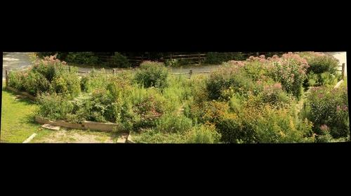 Butterfly Garden August 25