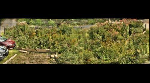 Butterfly Garden September 9