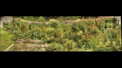 Butterfly Garden September 10