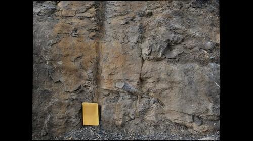 Stigmaria tree root fossil