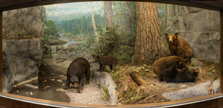 Black Bear Habitat Diorama Panoramic photography panoramic images hi ...