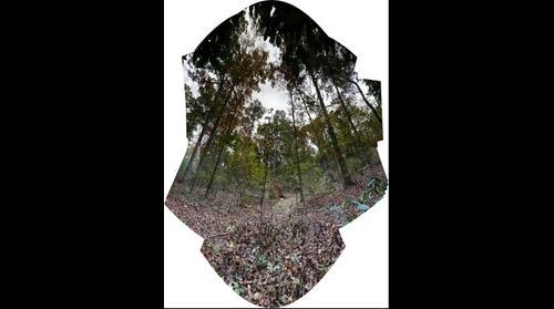 Treefall 2014 04 07 [0458-0564]