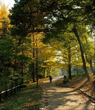 Autumn of my town park 2014_1