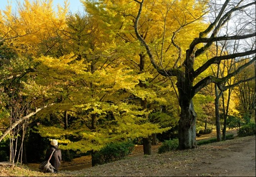 Autumn of my town park 2014_2