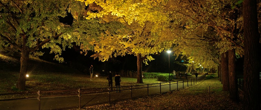 Autumn of my town park 2014_4