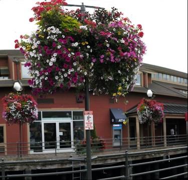 Flowers on Pier
