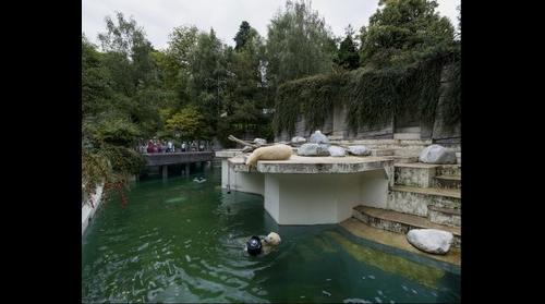 Polar Bears in Zoos: Wuppertal, Germany