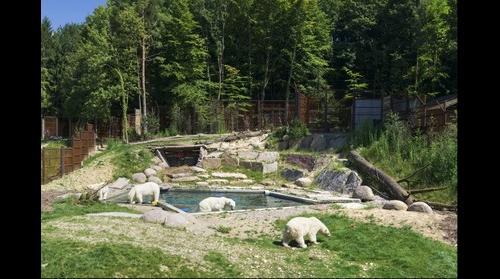 Polar Bears in Zoos: Mulhouse, France