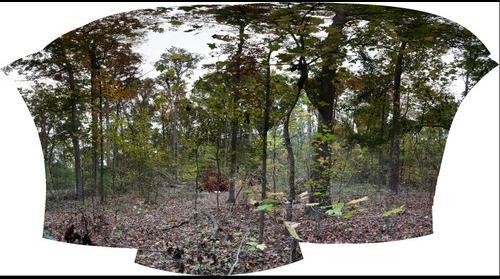 Treefall 2014 [0777-0882]