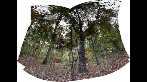 Treefall2014 [1309-1416]