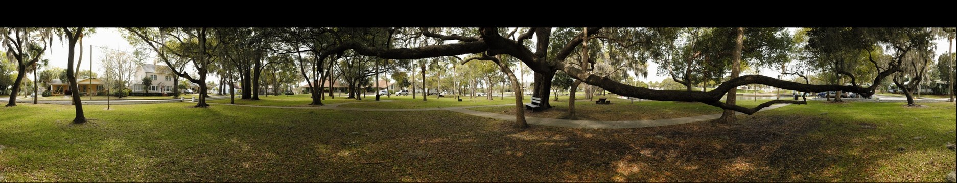 Live Oak at Craig Park - Stereo 3D