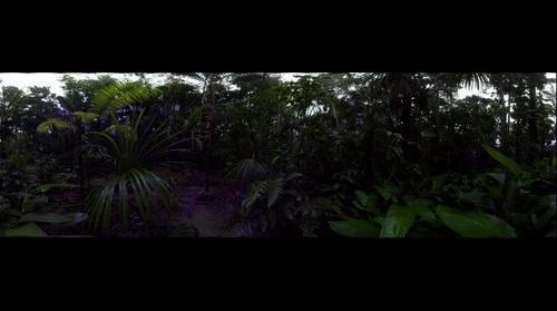 The Apoena Mereiles forest