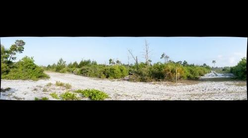Sand Pine Scrub 1
