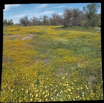 Wildflowers of Shell Creek