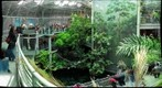 California Academy of Sciences Rain Forest, San Francisco, California by Trey Smith