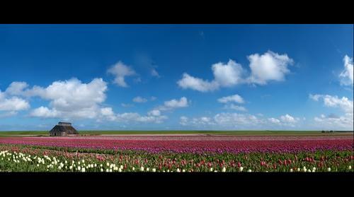 Boerderij in Friesland