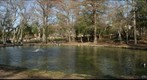 Huntsville: The Duck Pond