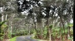 Fern Forest on Crater Rim Drive in HVNP