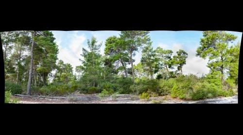 Seabranch Scrubby Flatwoods 2